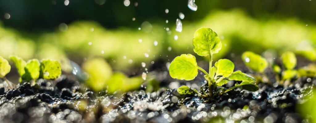 Acqua nei vivai, l'importanza che rivestono le irrigazioni