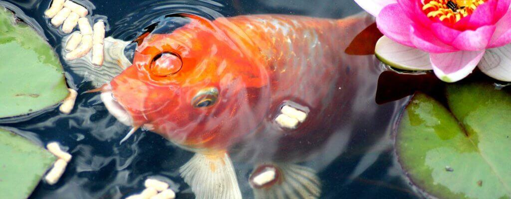 Ecosistema del laghetto esterno: gli animali e le piante da inserire